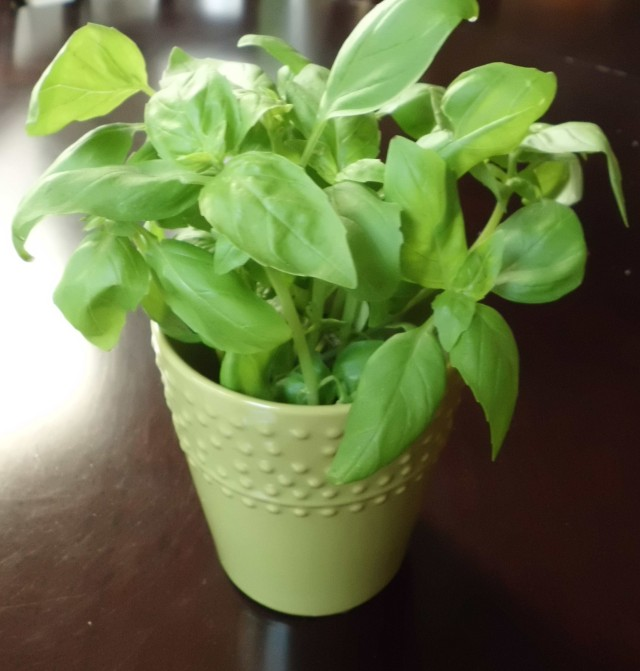 A little pot of basil by my kitchen window exudes a lovely scent all day long.